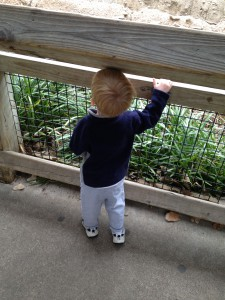 Evan at the Fort Worth Zoo (Jan. 2013)